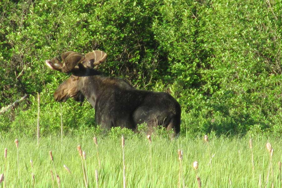 wildlife-viewing-hm