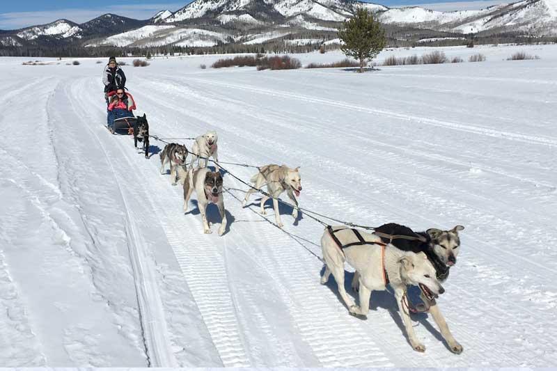 sled-dog-ride-3