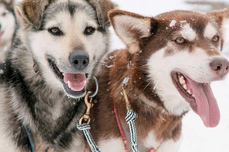 sled-dog-ride-6
