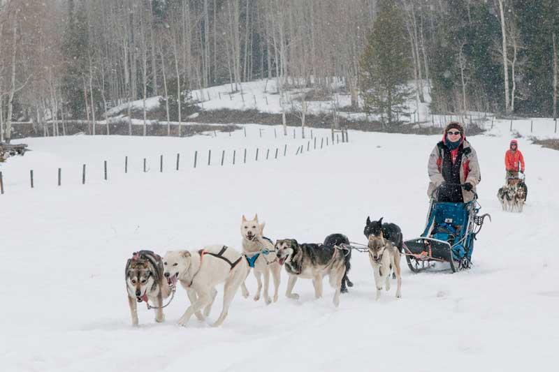 sled-dog-ride-8