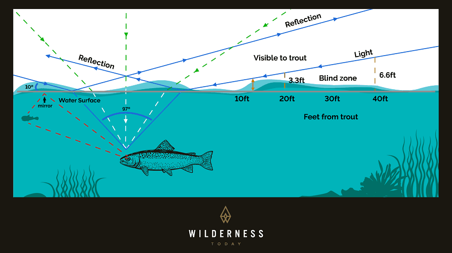 Trout Vision Graphic