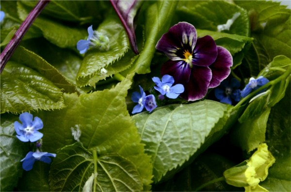 lime leaves and edible flowers in a salad