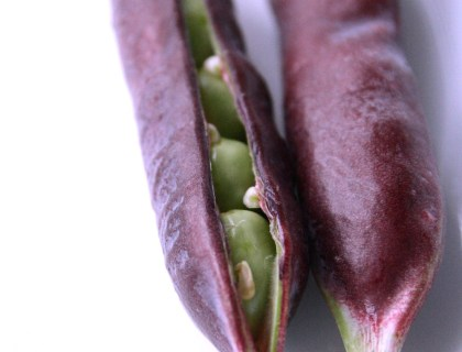 purple podded peas