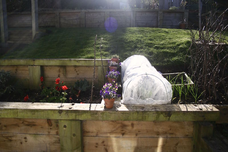 veg patch and anemones