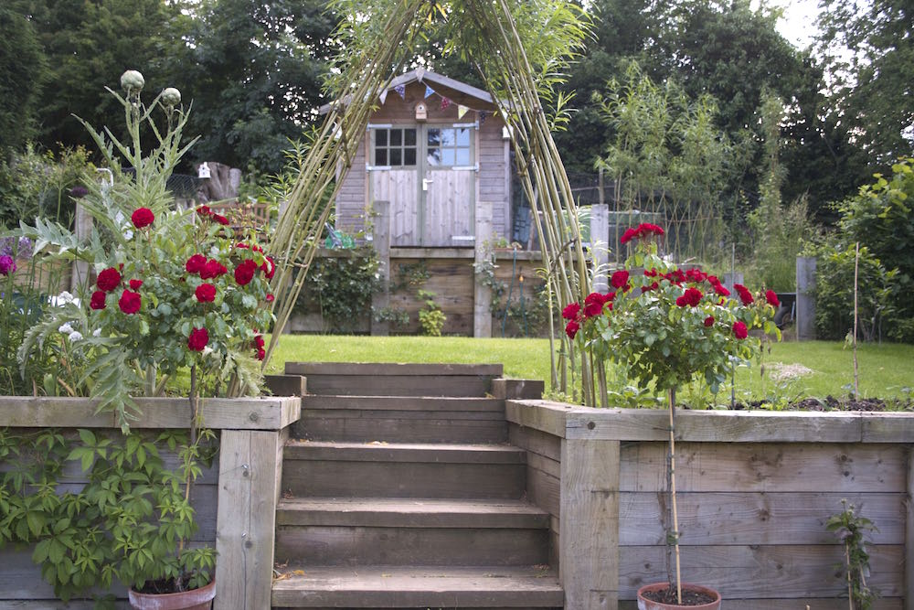 rose bushes and willow arch