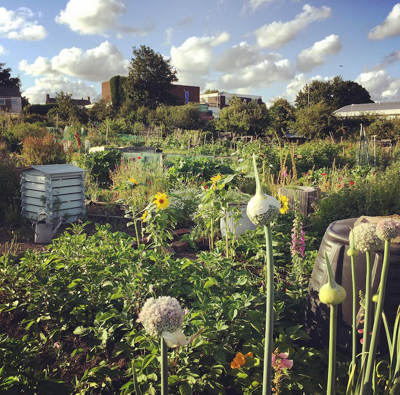 Karrie's allotment