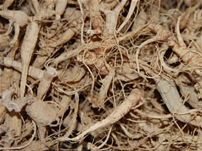 Dried Wild Ginseng Roots