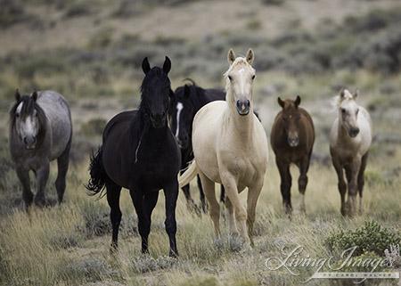 Salt Wells Creek Wild Horse Family