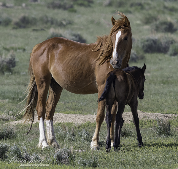 Checkerboard mare and foal