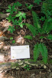 Fairy Garden RSVP - Forest Stationery Mockup 27