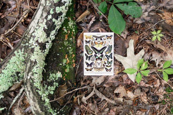 3-1-19 - Butterfly Freebie - 6