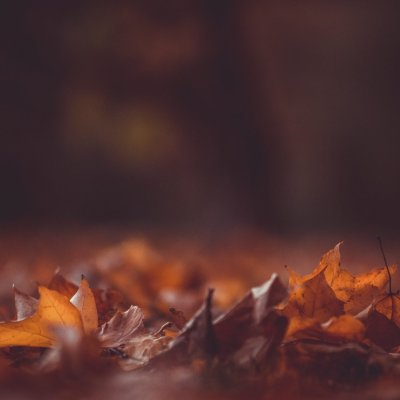 October Freebies from Wild Joy