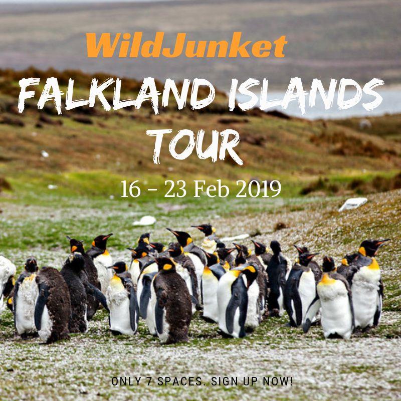 falkland islands tour
