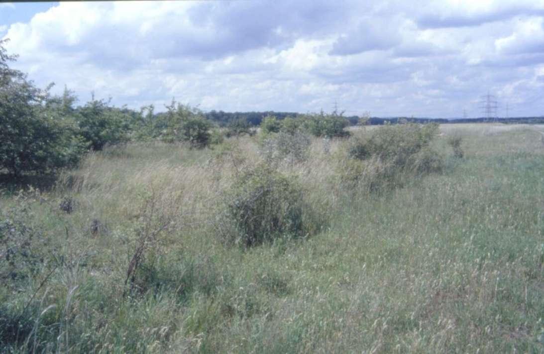 Heidenfeld