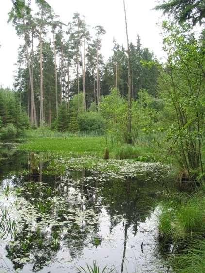 Waldweiher Silberbründl © Wildland-Stiftung Bayern