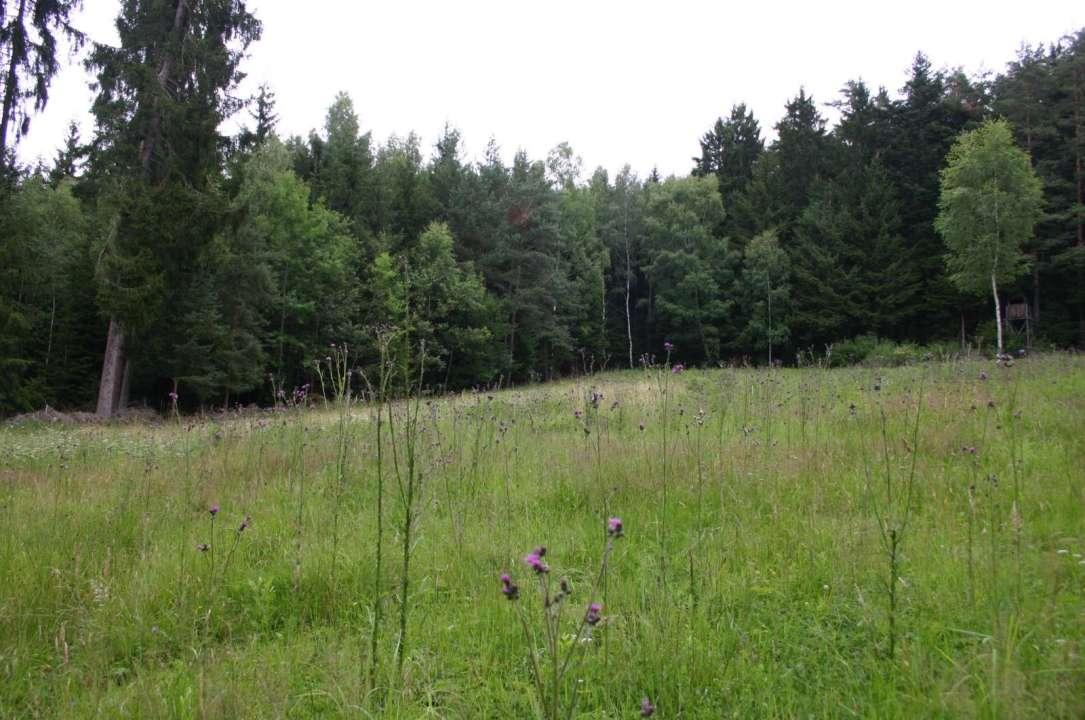Waldwiese bei Pfreimd
