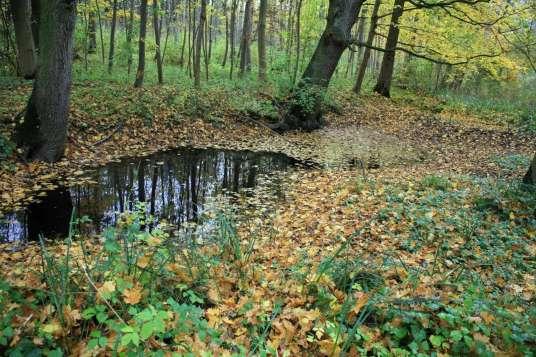 Tümpel im Wald ©J. Hemmer