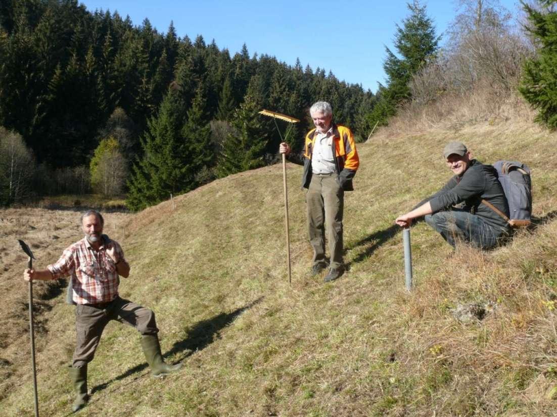 Wiese im Bayerwald
