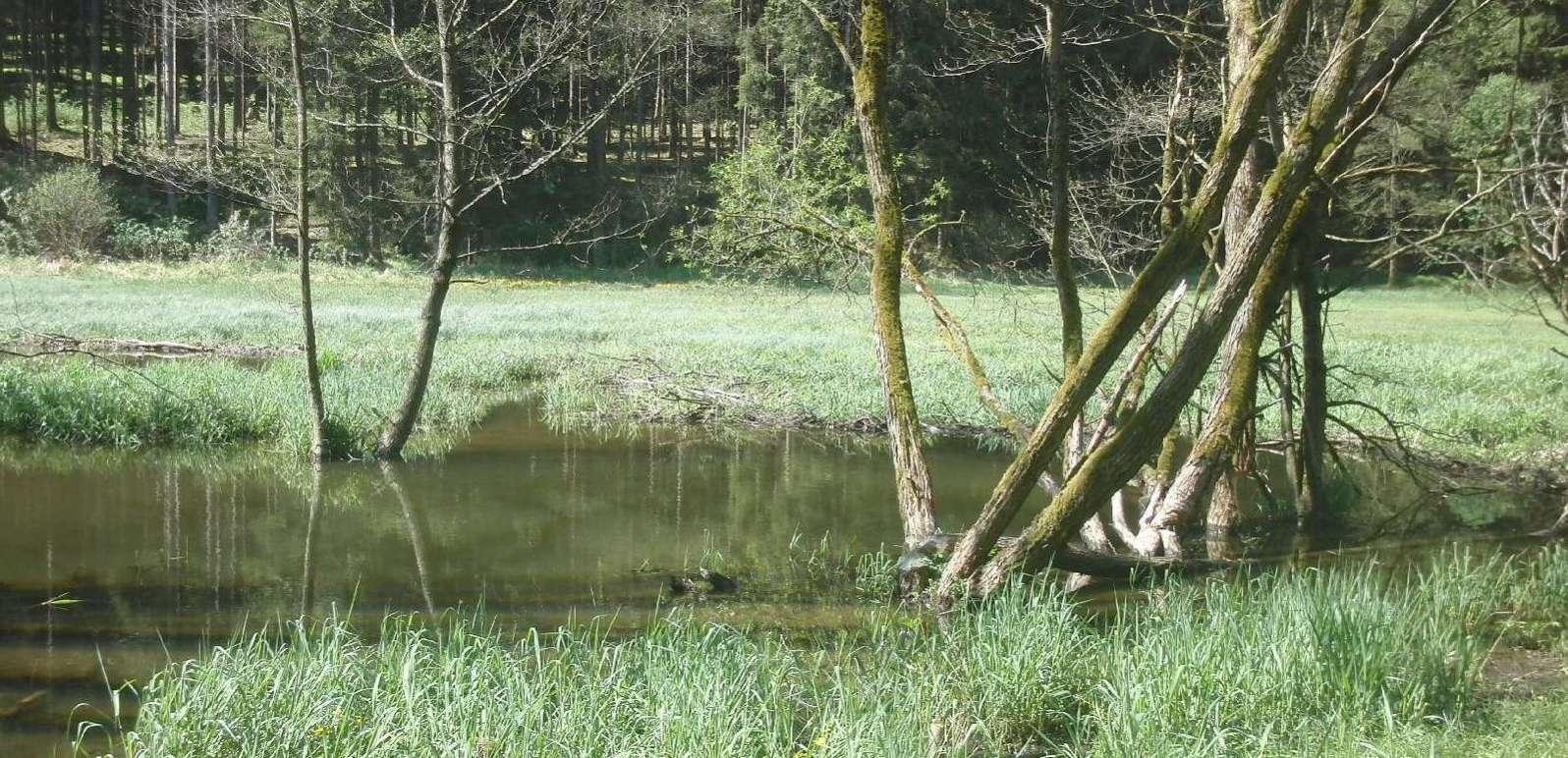 Waldwiese Gartenried