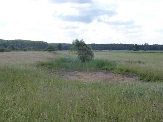 neu angelegte Wiesenseigen auf Wildland-Flächen©Wildland-Stiftung Bayern
