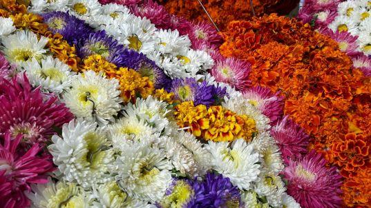 Blütenpracht beim Blumenkorso