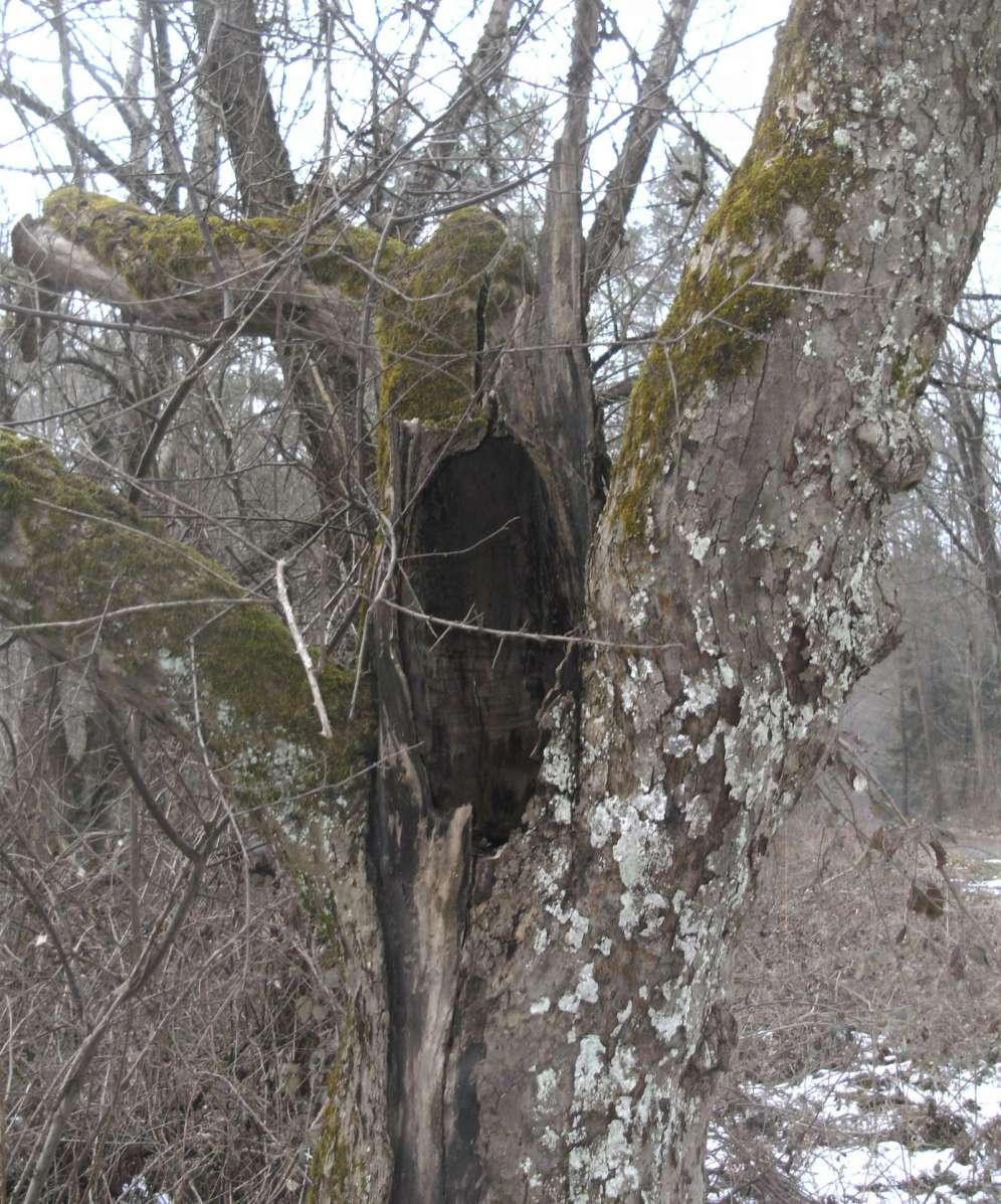 Totholz bietet natürliche Nischen und Spalten zum Überwintern für Insekten©U. Kay-Blum