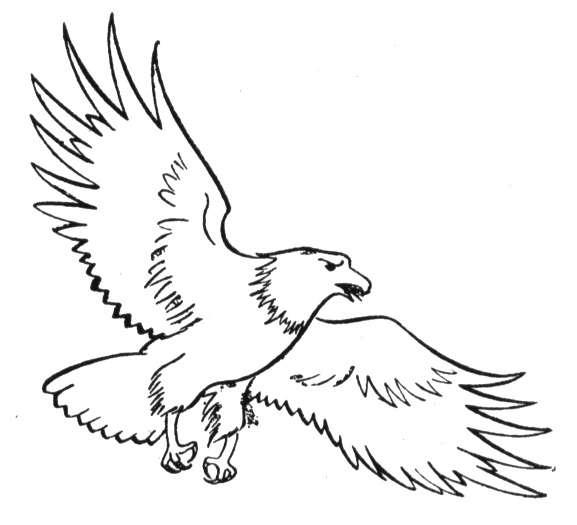 bald eagle coloring page click for details free printable bald eagle