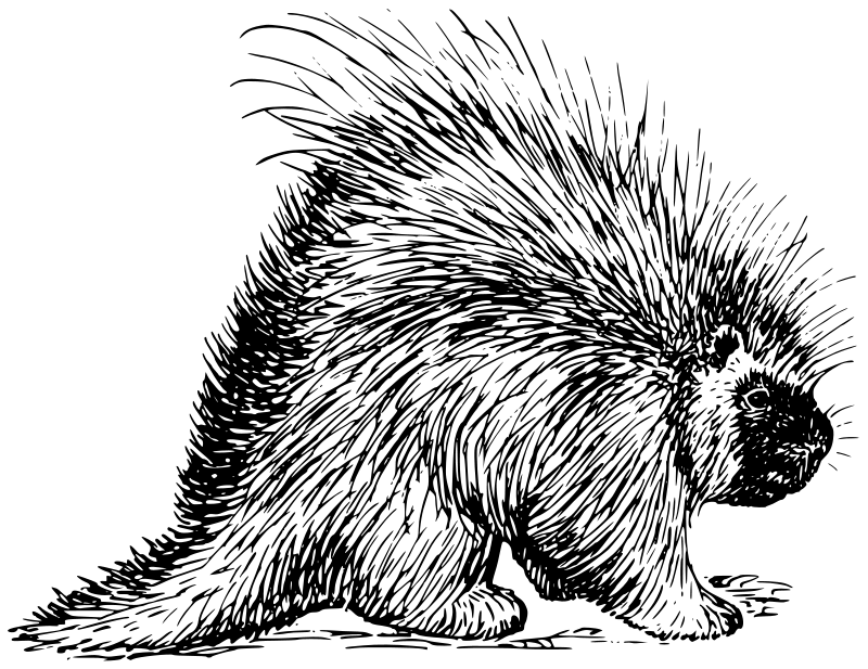 Charmant Free Porcupine Coloring Pages