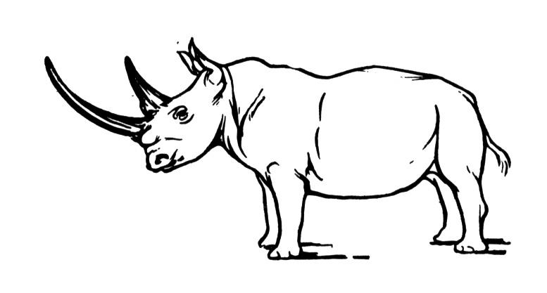 coloring pages of a rhino