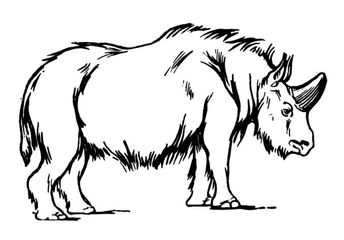 rhino colouring pages page 2