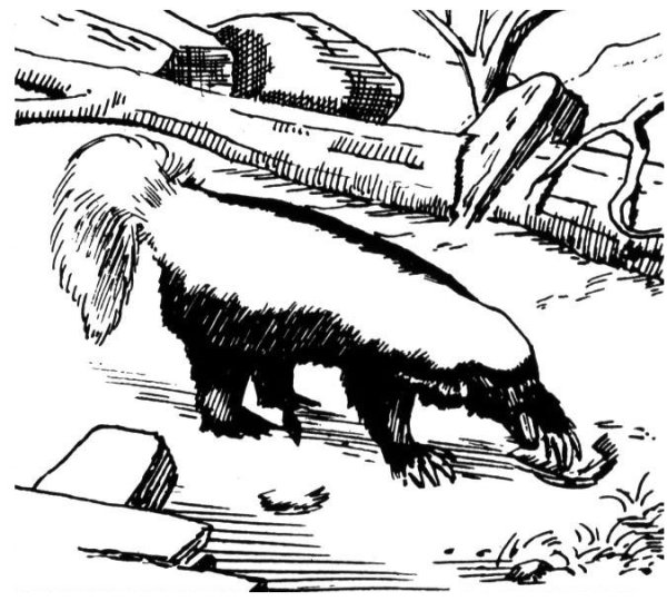skunk coloring pages # 11
