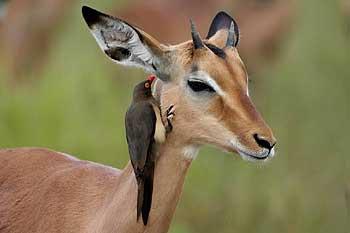African Safari Pictures