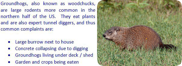 how to keep groundhogs away