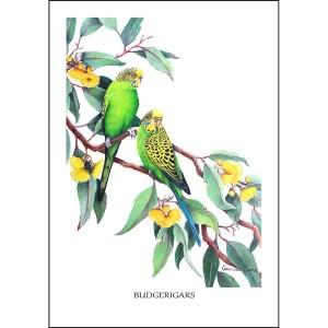 Budgerigars Greeting Card