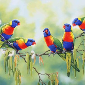 Conversations - Rainbow Lorikeets