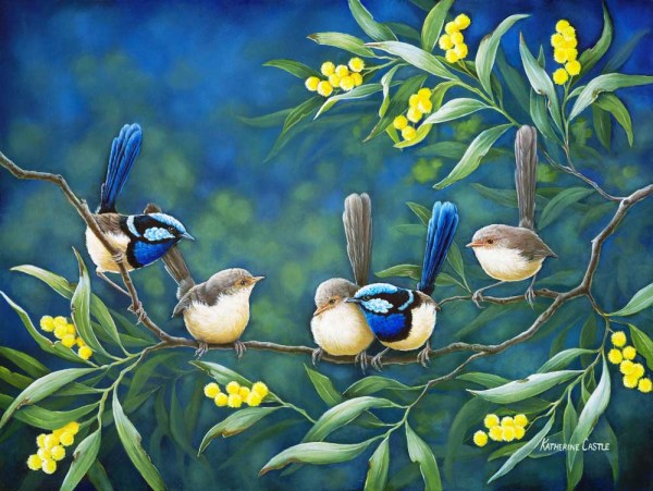 Centre of Attention - Fairy Wrens