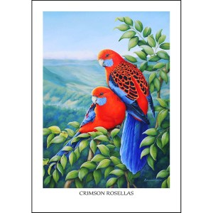 Crimson Rosellas Greeting Card