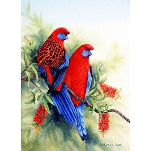 Harmony - Crimson Rosellas