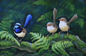 Mr-Superb - Superb Fairy Wrens