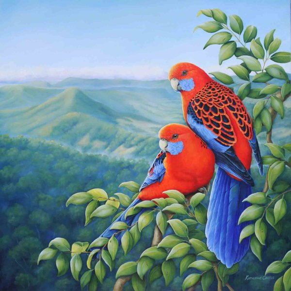 Rosella Country - Crimson Rosellas