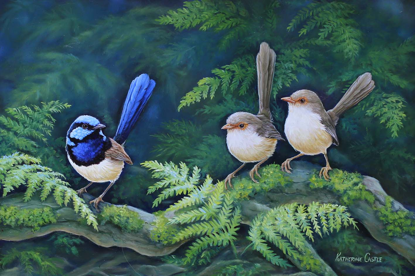 Mr Superb - Superb Fairy Wrens