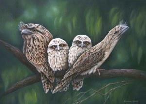 Quartet - Tawny Frogmouths