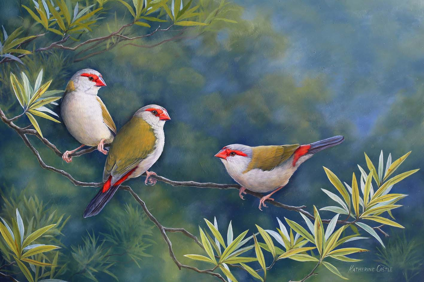 The Visitor - Red-Browed Finches