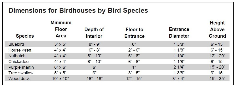 bird house design hole size