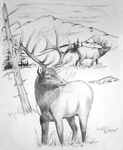 Rocky mountain elk coloring pages Young elk coloring page free ... | 309x253