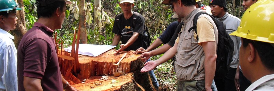 MB | Where the logging ends in Indonesian Borneo, the forest clearing begins