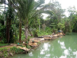 Sago palms being grown by the water in Central Maluku District, Indonesia. Wetland agriculture, or paludiculture, is a practice which can provide lucrative livelihoods to peatland communities while avoiding the need to drain and burn peatland for palm oil or paper crops. Image: CIFOR, CC BY-NC-ND 2.0
