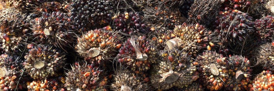 HK |  End of the 1st semester – so why Hilary always talk about palm oil