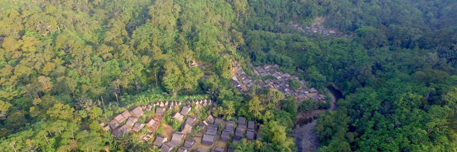 CB | Tropical forests losing ability to absorb CO2, study says