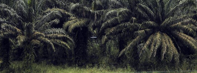 Bloomberg | Palm Oil Importers Won't Meet Zero Deforestation Goals by 2020